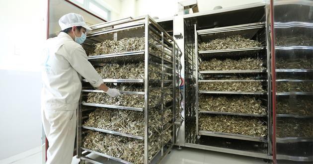 Kỹ thuật sấy nấm bằng tủ sấy công nghiệp